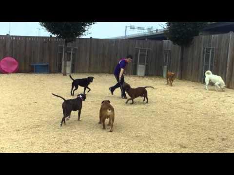 Turner, Dax, Chap, Coco, Roxy S, Libby, Betty, Roxy, Gracie