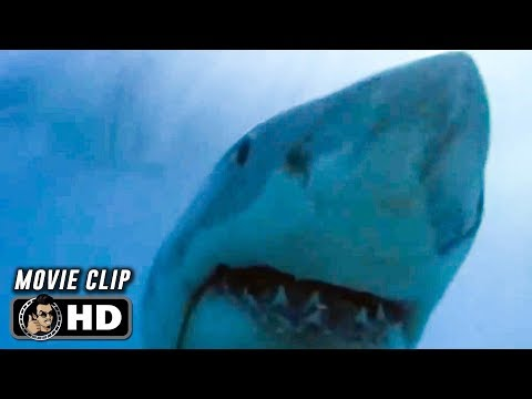JAWS Clip - Cage (1975) Steven Spielberg