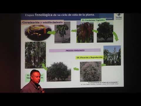 Nutrición Y Uso De Hormonas En Plantas.