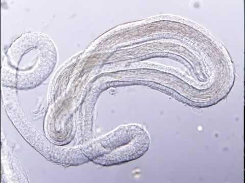 Заставили мужа слизывать сперму с жены после толпы негров