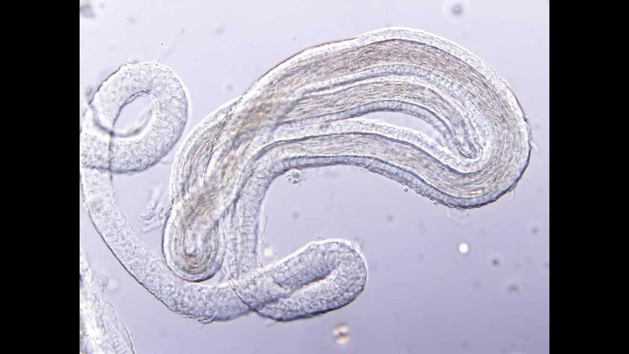 Sperm receptacle 2 keeani lei