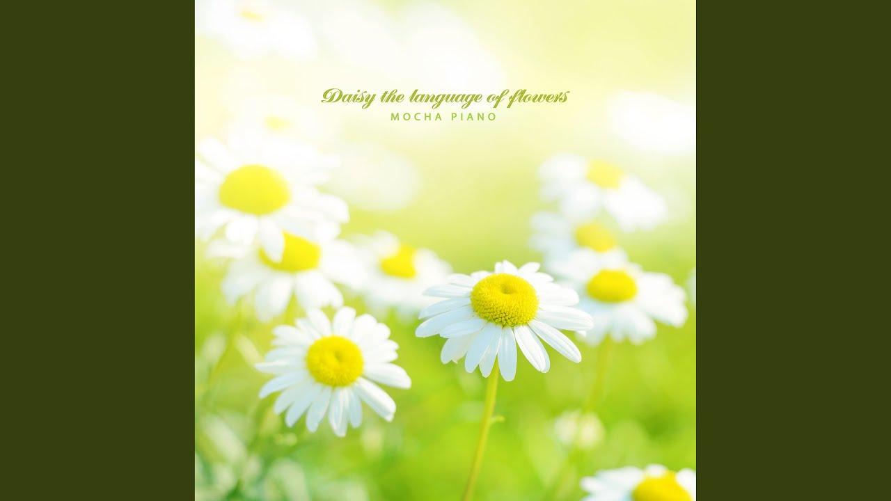 daisy flower language youtube daisy flower language izmirmasajfo