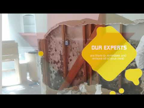 Mold Remediation Tampa | Mold Removal Tampa FL (813) 517-8989