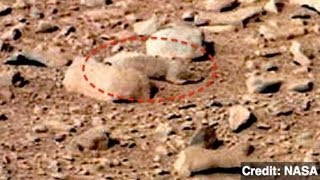 Does This Photo Show Signs of Life on Mars?
