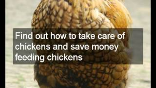 Free Range Chicken Eggs | Tips On How To Farm The Most Free Range Chicken Eggs & Save $$$$$$$$$$$$$