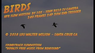 BIRDS - HFR Slow Motion #1 Sony RX10 IV  by  Lou Walter Wilson