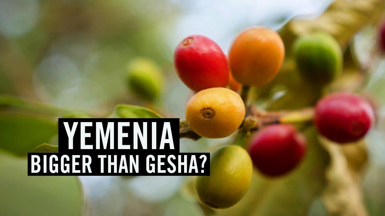Yemenia: Bigger than Gesha?