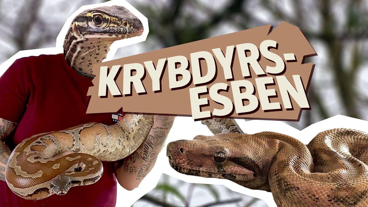 Slanger, varaner og tudser – Esben har over 20 krybdyr