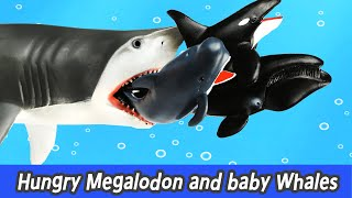 [EN] Hungry Megalodon and baby whales, sharks and whales cartoons for kids, collectaㅣCoCosToy