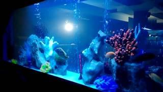 видео Купить, заказать изготовление аквариума. Основные правила выбора.