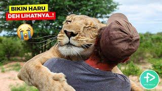 10 Persahabatan Manusia Dengan Hewan Berbahaya Yang Mengagumkan