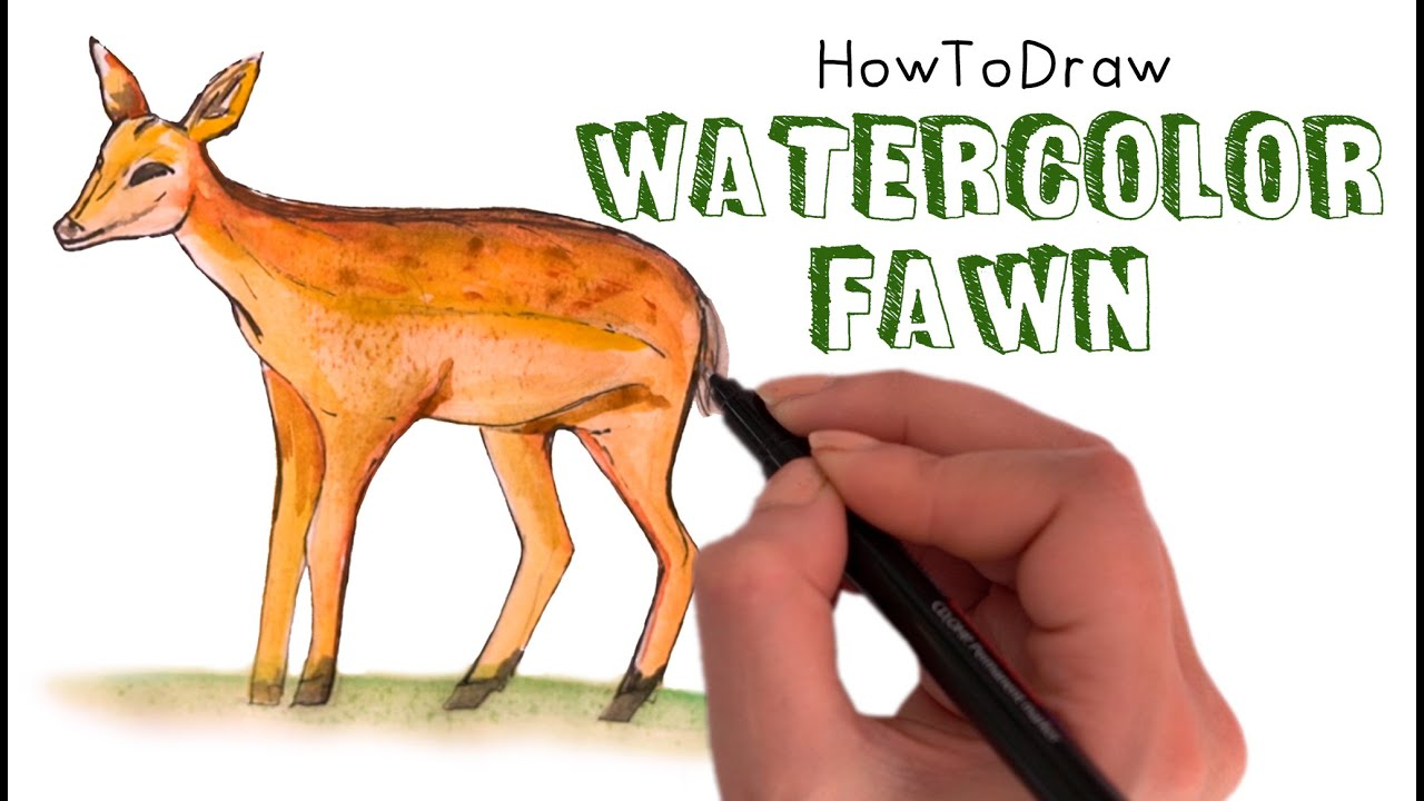 How to Draw a Fawn 🦌 (Baby Deer)