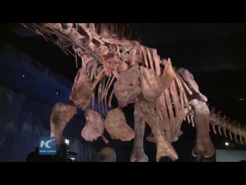 Titanosaur on display at American Museum of Natural History
