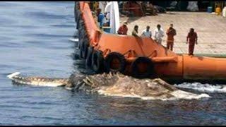 Gigante y Extraño Monstruo Marino REAL Encontrada en el Golfo Pérsico