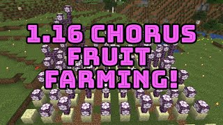 How To Make A Chorus Fruit Farm In Minecraft Bedrock 1 16 Herunterladen Information about the chorus fruit item from minecraft, including its item id, spawn commands and more. trshow