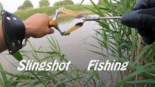 Рыбалка в Камышах с Рогаткой Летняя охота на Пеленгаса