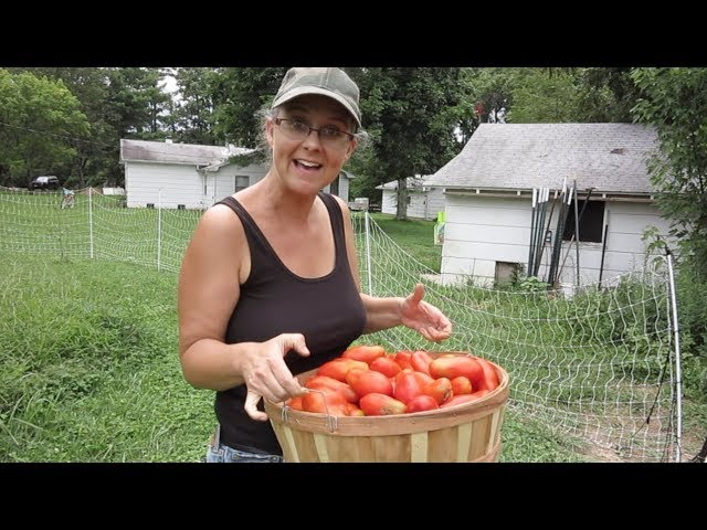 nothing-can-stop-these-tomatoes-plus-a-visit-from-white-house-on-the-hill