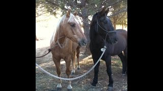 The Story of Mr T, Tanner & Buddy - How They Ended Up as Think Like A Horse