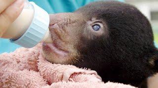 An Unusual Guest Arrives at This Orangutan Rescue Center