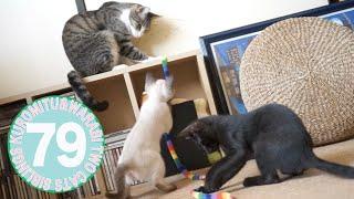 【綱引き対決】猫vs子猫