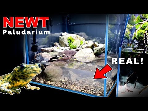 newt-paludarium-waterfall:-filtration-&-substrate-||-md-fish-tanks