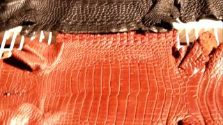 Freshwater Crocodile Handbag Size Skins