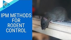 IPM Methods for Rodent Control (episode 85)