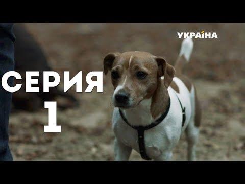 Как считать годы у собак