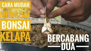 Cara Mudah Membuat Bonsai Kelapa Bercabang Dua Easy Ways to Make Bonsai with Two Branches of Coco