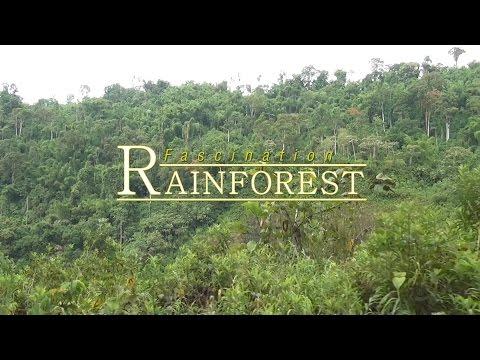 Fascination Rainforest (2012) Blu-ray disc 1080p