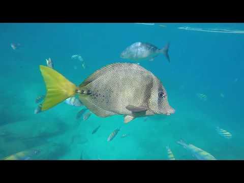 San Jose Del Cabo Santa Maria Beach Snorkel