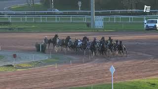 Vidéo de la course PMU GRAND PRIX BARON D'ARDEUIL AOC BUZET