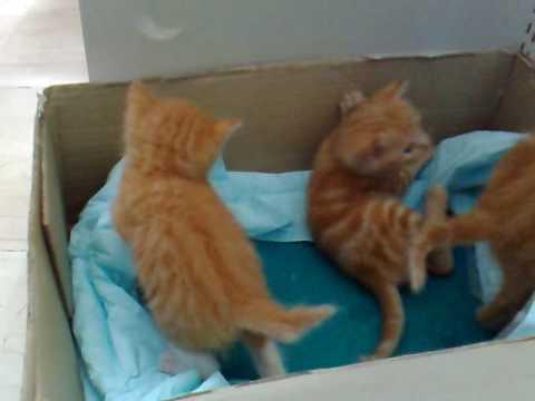 Gattini 2 teneri giocano e ne combinano di tutti i colori for Foto di zig e sharko