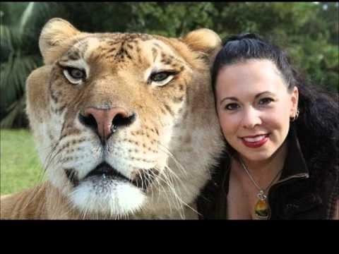 Aslan ile Kaplanın yavrusu Kaslan