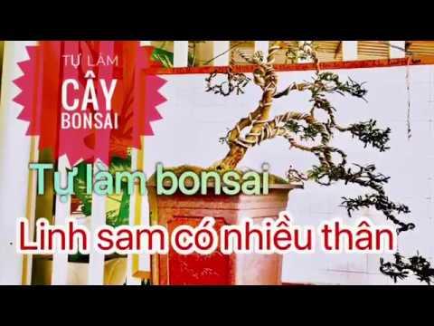 Tự làm cây bonsai thác đỗ có nhiều thân -người mới biết chơi