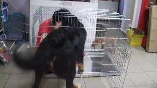 клетка для собаки(Приобрести клетку для собаки можно тут https://goo.gl/CP1P5w http://zooelen.ru посмотреть прайс и связаться со мной. http://zooelen...., 2015-03-18T20:53:03.000Z)