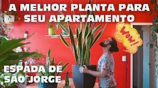 A Planta Mais Versátil Para Apartamento – Espada de São Jorge