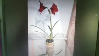 Миниатюра для видео