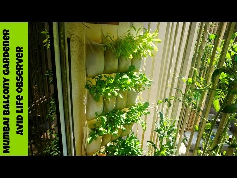Vertical Gardening | Ikea Shoe Organizer Hack  For Growing Greens