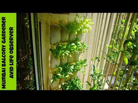 Vertical Gardening  Ikea Shoe Organizer Hack  For Growing Greens