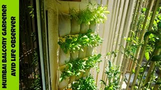 vertical gardening idea   ikea shoe organizer hack for growing greens
