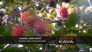 NET5 - Indonesia Kaya Panen Rambutan