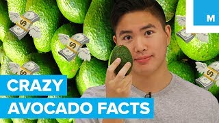 9 Mind-Blowing Facts About the Avocado - Sharp Science