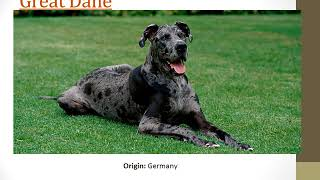 Top 30 Cute dog   and their origin