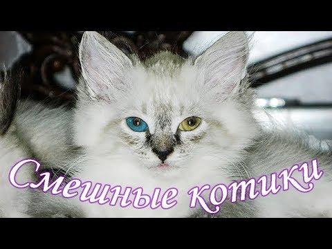 Милые  котята / cute kittens