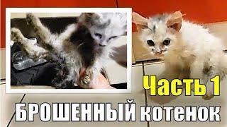 Брошенный котенок 1/3 СПАСЕНИЕ БЕЗДОМНОГО КОТЕНКА Уличный котенок. Часть первая