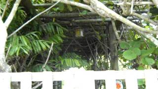 Kiwi Growing the Right Way.mov.AVI