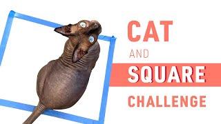 Sphynx Cat vs Square Challenge