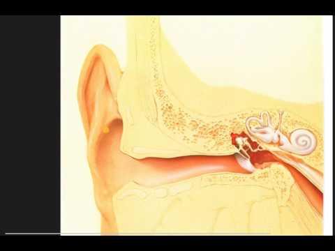 56  ear and eye scope exam findings