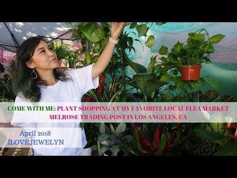 Come with me: Plant shopping at Melrose Trading Post | LAx flea market | April 2018 | ILOVEJEWELYN